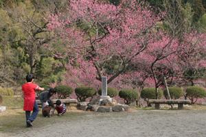 湯田川温泉梅林公園「梅まつり」開催